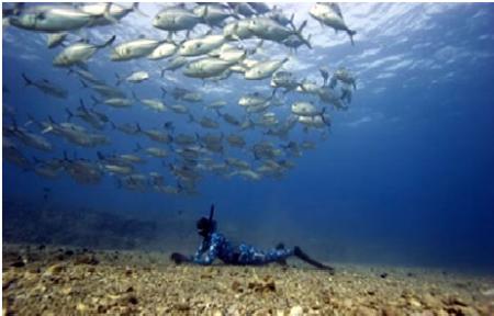 Resultado de imagen de pesca submarina